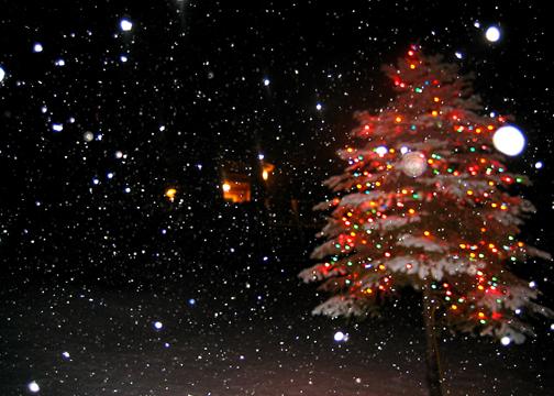 Christmastreeandsnow_L