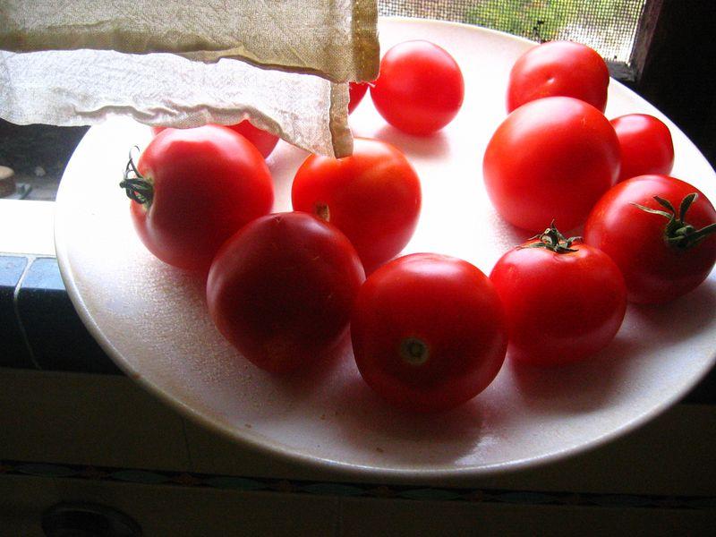Tomatoes_L