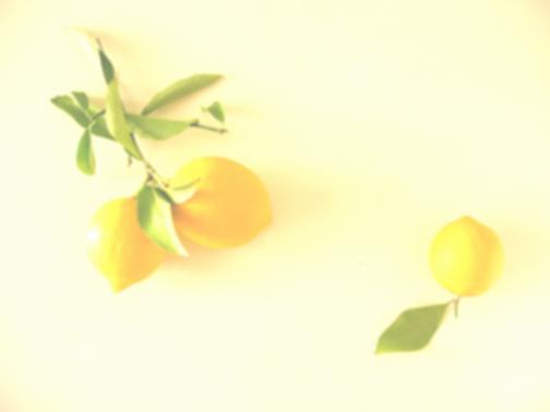 Lemons_L