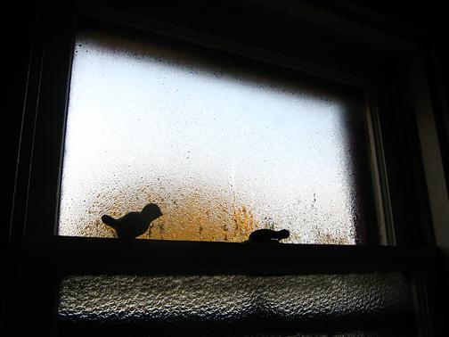 Windowsill_l