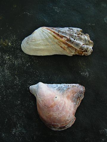 Shells_l